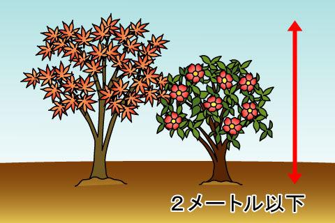 潅木(かんぼく)(カンボク)