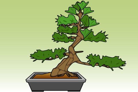木姿(きすがた)(キスガタ)