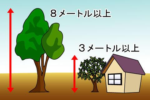 高木(こうぼく)(コウボク)