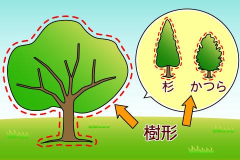 樹形(じゅけい)(ジュケイ)