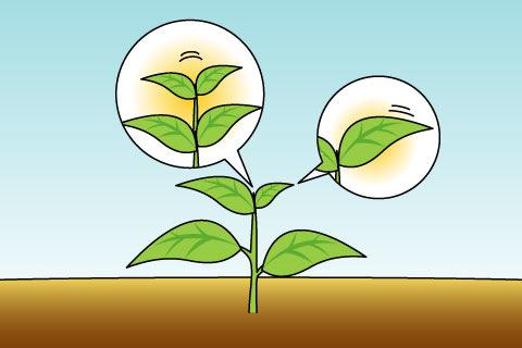 植物ホルモン(ショクブツホルモン)