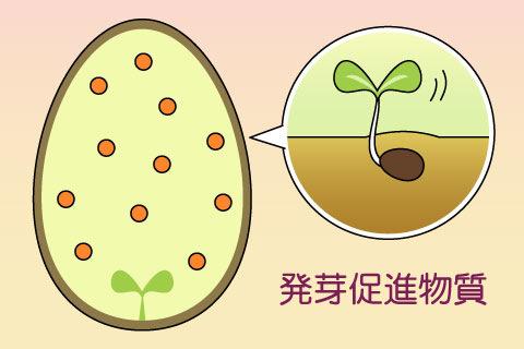 発芽促進物質(はつがそくしんぶっしつ)(ハツガソクシンブッシツ)
