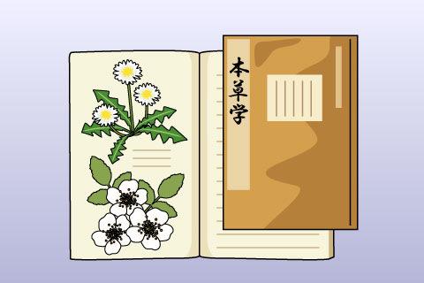 本草学(ほんぞうがく)(ホンゾウガク)