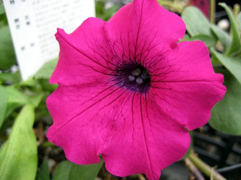 陽性植物(ヨウセイショクブツ)