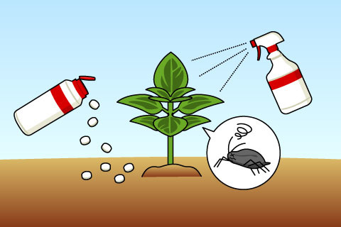 殺虫剤、殺菌剤(さっちゅうざい、さっきんざい)(サッチュウザイ、サッキンザイ)