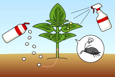 浸透移行性殺虫剤(しんとういこうせいさっちゅうざい)(シントウイコウセイサッチュウザイ)
