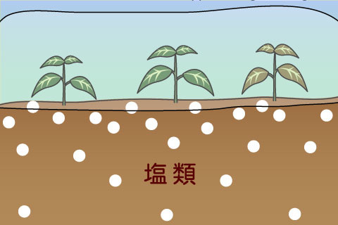 塩類障害(えんるいしょうがい)(エンルイショウガイ)