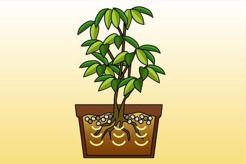 緩効性肥料(かんこうせいひりょう)(カンコウセイヒリョウ)