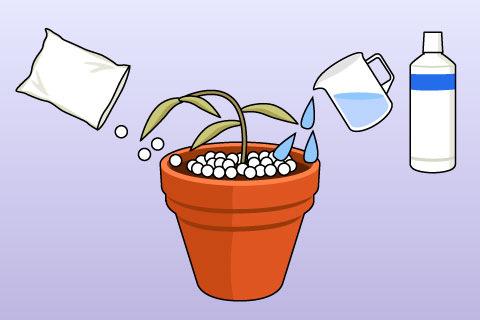 肥料あたり(こえあたり、ひりょうあたり)(コエアタリ、ヒリョウアタリ)