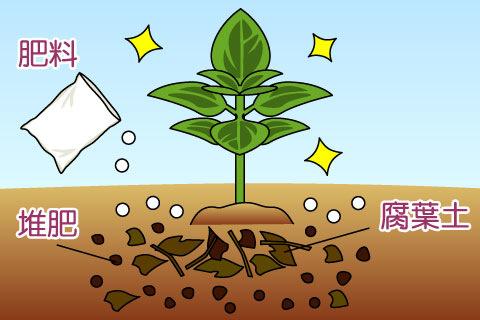 肥料もち(こえもち、ひりょうもち)(コエモチ、ヒリョウモチ)