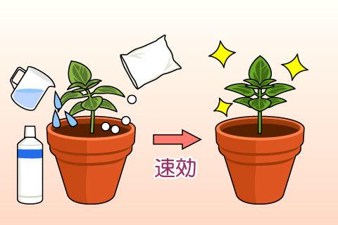速効性肥料(そっこうせいひりょう)(ソッコウセイヒリョウ)