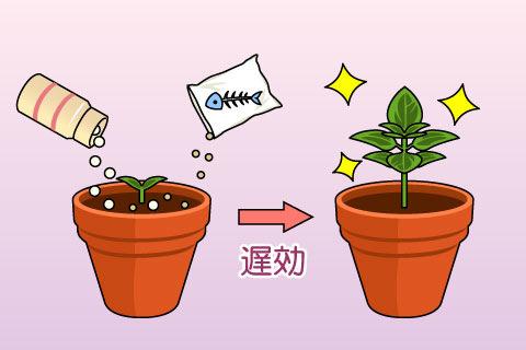 遅効性肥料(ちこうせいひりょう)(チコウセイヒリョウ)
