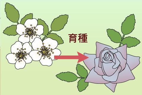 育種(いくしゅ)(イクシュ)
