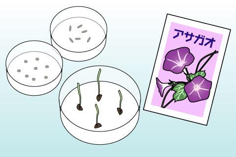 種苗検査(しゅびょうけんさ)(シュビョウケンサ)