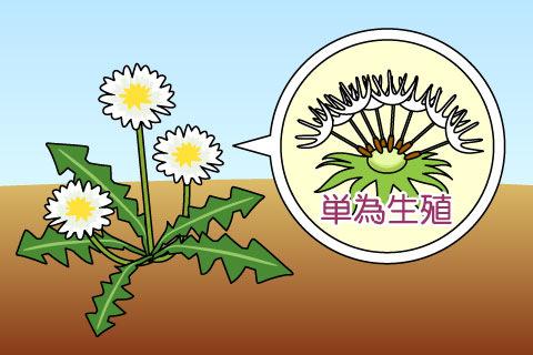 単為生殖(たんいせいしょく)(タンイセイショク)