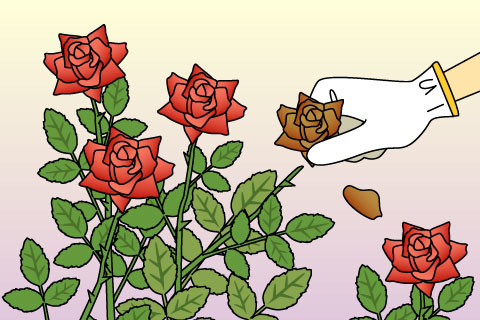 花がら摘み(はながらつみ)(ハナガラツミ)