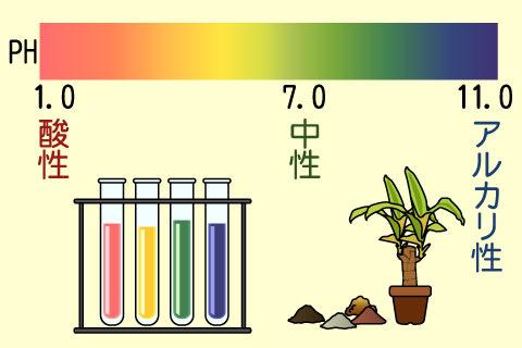 pH(ペーハー)(ペーハー)
