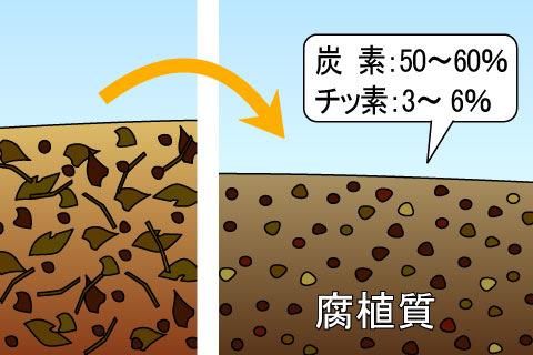 腐植質(ふしょくしつ)(フショクシツ)