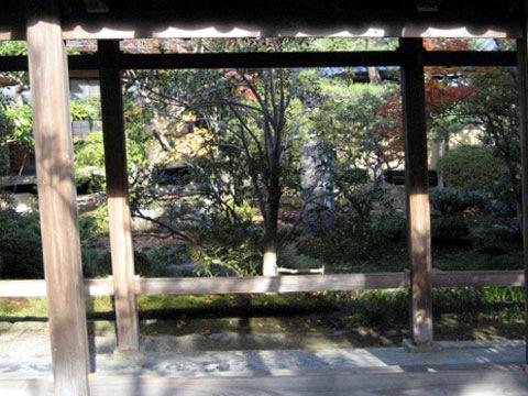 坪庭(つぼにわ)(ツボニワ)