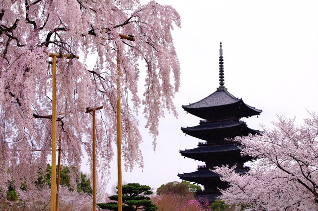 京都駅以南は文化と歴史の宝庫。あの寺田屋もおいしい日本酒もある「洛南エリア」