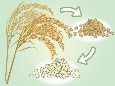 米の精米について