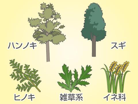 花粉症を引き起こすアレルゲンとその時期