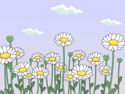 パルドサム(ノースポール)(開花時期:3~6月)