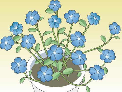 アメリカンブルー(開花時期:6~10月)