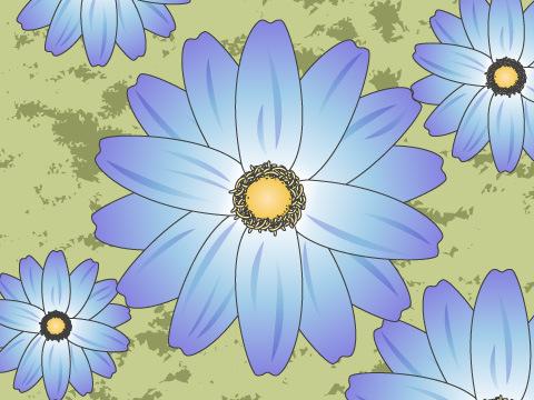 サイネリア(開花時期:1~4月)