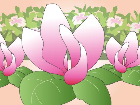 ガーデンシクラメン(開花時期:11~3月)