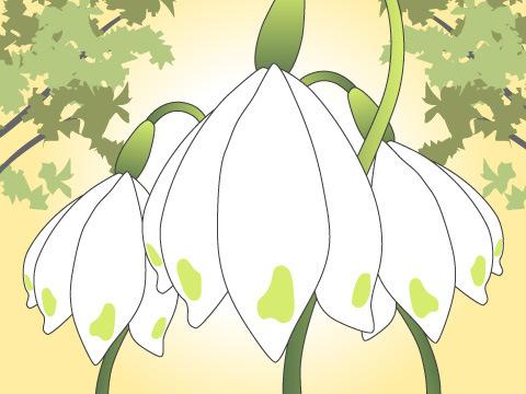 スノードロップ(開花時期:2~4月)