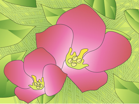 カランコエ(開花時期:10~5月)
