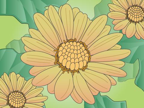 ユリオプスデージー(開花時期:11~4月)