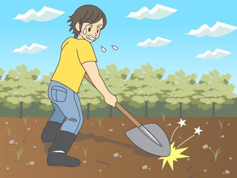 植物が育ちにくい土