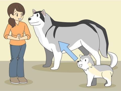 イヌの選び方