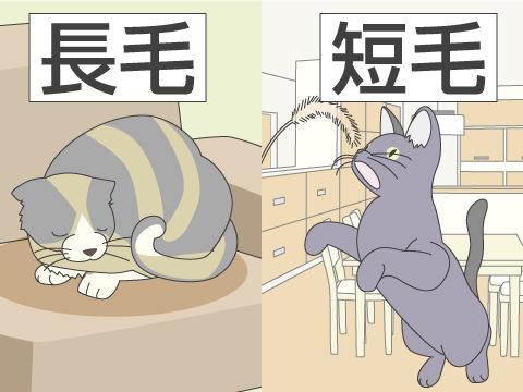 ネコの選び方