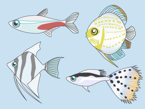 熱帯魚の選び方