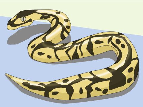 ヘビの飼い方