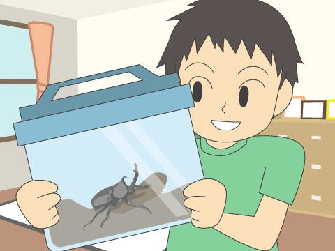 カブトムシ・クワガタムシの成虫の飼育