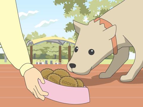 イヌとお茶を楽しむ