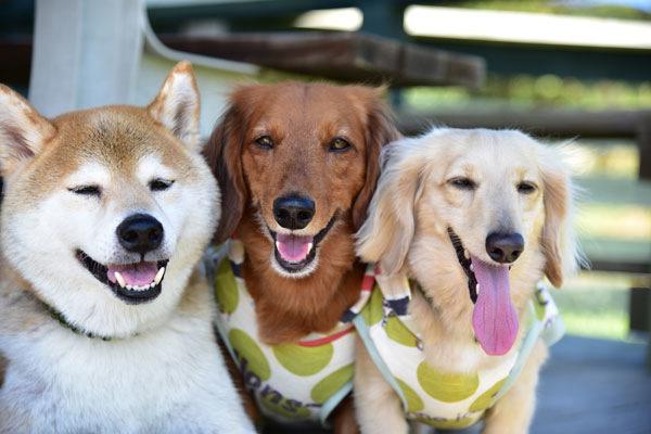 2-1.日本で人気の犬種