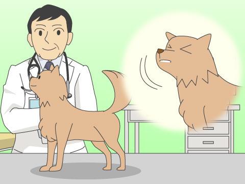 ペットが発する不調のサインを見逃さない