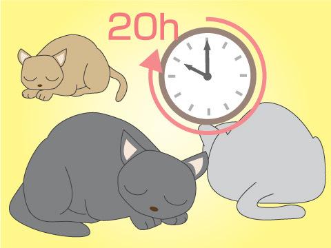 猫の生活スタイル