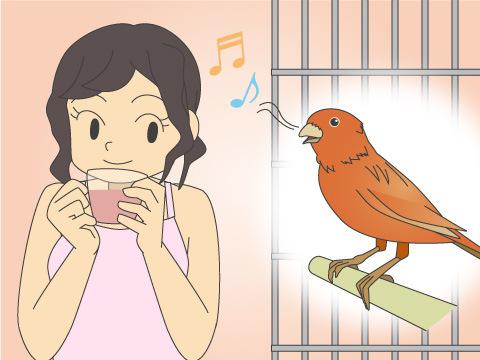 鳥を飼う目的から種類を選ぶ