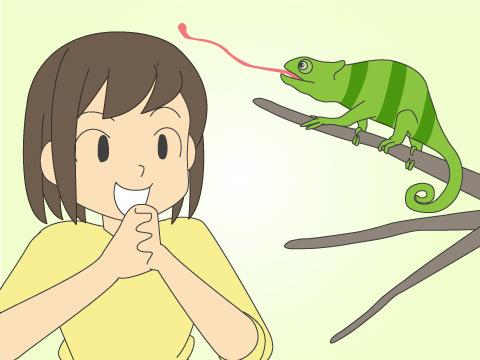 爬虫類が意外な人気を集める理由