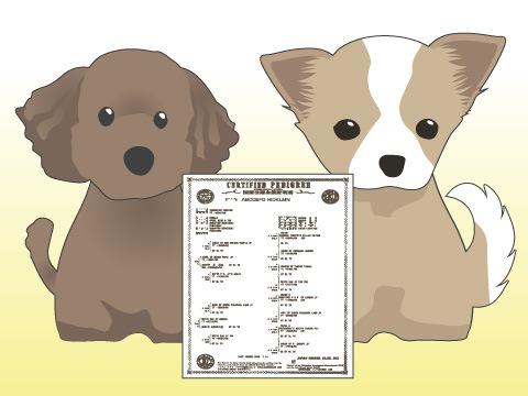 「ミックス犬」という呼び名の背景
