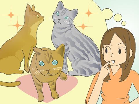 ミックス猫が注目される理由