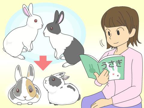 ミニウサギとは