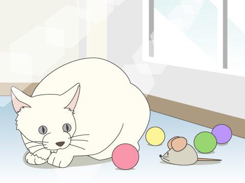 猫は留守番が得意?