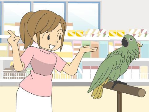 インコやオウム、九官鳥がしゃべる理由